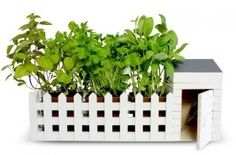 Indoor Allotment...Herb Garden for the Kitchen! #kitchengadgets