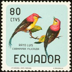 Wire-tailed Manakin stamps - mainly images - gallery format