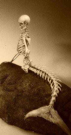 Mermaid Skeleton   House of Beccaria~