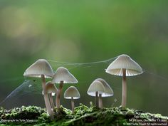 Mushrooms, from National Geographic.
