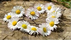 Free Image on Pixabay - Daisy, Heart, Flowers, Flower Heart April Birth Flower, Birth Month Flowers, Tender Is The Night, Old Farmers Almanac, Long Distance Love, Flower Meanings, Landscape Photography Tips, Living Off The Land, Finding God
