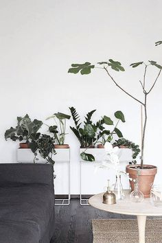 Wir lieben Sie einfach: Die Plant Box von Ferm Living! Hier entdecken und shoppen: https://sturbock.me/pu9
