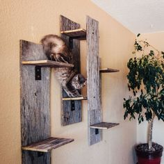 Rustic Cat Furniture – This Eco-Friendly Cat Furniture is Perfect for Cat Lovers… - Hunde und Katzen Rustic Cat Furniture, Pet Furniture, Diy Cat Tree, Cat Run, Cat Perch, Cat Towers, Cat Shelves, Cat Accessories, Cat Wall