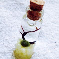 Japanese Marimo Moss Ball Terrariums  northwestkombucha.com