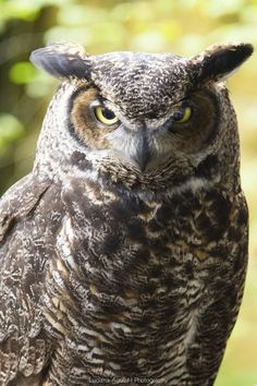 """Photo """"18052013-owl"""" by lucianaaguiar"""