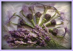 Levendula kosàrka Lavender Wands, Lavender Fields, Lavender Flowers, Victorian Decor, Wedding Party Favors, Nature Crafts, Planting Flowers, Decoration, Lilac