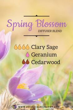 Spring essential oils are bright, fresh, uplift and inspiring. Enjoy these custom blended 6 essential oil diffuser recipes for Spring. PLUS: Diffuser Tips! Grounding Essential Oil, Clary Sage Essential Oil, Geranium Essential Oil, Essential Oil Diffuser Blends, Cedarwood Essential Oil Uses, Doterra Diffuser, Geranium Oil, Diffuser Recipes, Aromatherapy Oils