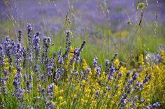 Aguas florales para revitalizar la piel
