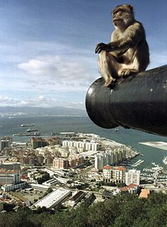 Gibraltar...monkeys everywhere if you walk from the airport into 'town'...wish i'd gone to morocco having gone this far...