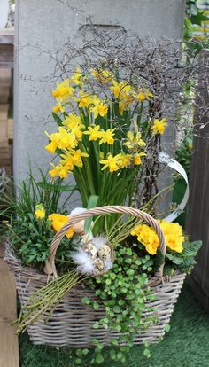 All Details You Need to Know About Home Decoration - Modern Easter Flower Arrangements, Easter Flowers, Floral Arrangements, Porch Garden, Garden Trellis, Pot Plante, Deco Floral, Orchid Care, Indoor Planters