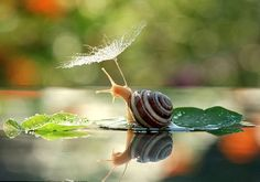 Vyacheslav Mischenko photographed the snail resting on a leaf in a forest near his home city of Berdychiv, Ukraine.