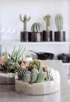 kaktusy kompozycje