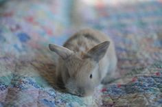 Simplemente tranquiliza tu mente y mira estos conejitos. | 24 conejitos bebé que aliviarán tu regreso al trabajo