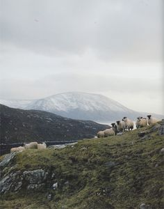 Sheep from the Outer Hebrides provide the wool for Harris Tweed.  Harris Tweed  From Land to Street  By Lara Platman