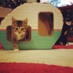 Amazon.com : KITTY CAMPER Cardboard Cat Houses with Ebook, Playful Pink : Pet Supplies