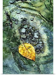 Golden Leaf in Emerald Stream | Mike Moats