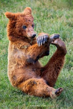 Yoga bear ...yh