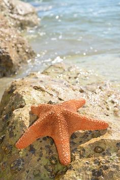 Tiger Starfish 10 to 15 cms Orange Aesthetic, Beach Aesthetic, Sunset Beach, Beach Art, Am Meer, Beach Themes, Summer Themes, Summer Colors, Ocean Life