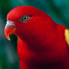I used to have a chattering lory who could mimic a coffee pot percolating