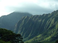 Oahu, Hawaii I loved how green everything was!