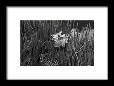 black and white, iris, landscape, flower, nature, michiale schneider photography
