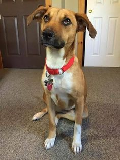 Close  OptionsShareSendLikeShow more reactions Timeline Photos  Watertown CT Municipal Animal Shelter Page Liked · June 29  ·    Lost 06/28/16, Watertown/Oakville, CT. Morin St. area. Mango, is a friendly, young, FS, Mtn Cur/Retriever Mix, wearing pink collar and tags; Contact Animal Control, 860-945-5217.