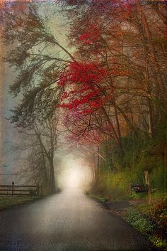 Misty road in Autumn...so love this!!