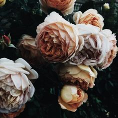 Muted peonies