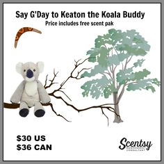 1000 Images About Scentsy Buddies On Pinterest Scentsy