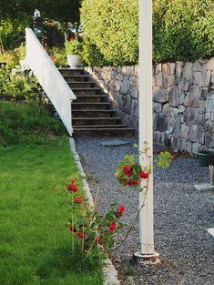 A young Flammentanz in my garden Climbing Roses, Work Travel, The Locals, Sidewalk, Garden, Garten, Side Walkway, Lawn And Garden, Walkway