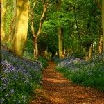 Fondo de pantalla Camino en el bosque