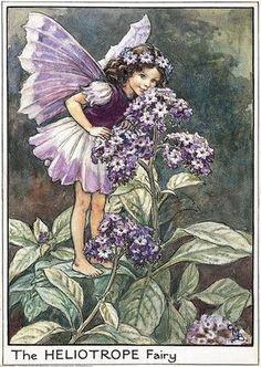 Cicely Mary Barker, Illustration Blume, Fantasy Illustration, Illustration Girl, Flower Fairies, Fairies Garden, Fairy Pictures, Vintage Fairies, Beautiful Fairies