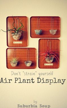 How To Make An Air Plant Display | Shelterness
