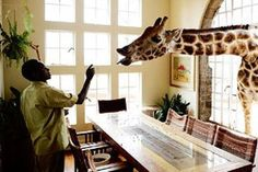 Mount Kenya Safari Club: apparently this is in the bar. Have a drink with a Giraffe. Kenya Travel, Africa Travel, Mount Kenya, Kenya Africa, East Africa, Exterior Paint Colors, Amazing Destinations, Honeymoon Destinations, African Safari