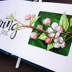 Spring has sprung| Отгремел день тюльпанов. Самое время ждать  пору яблонево-цветущих снимков!) #copic, #copicart, #copicmarker, #sketch, #скетч, #illustration, #иллюстрация, #sketchbook, #savannasketch, #art, #art_we_inspire, #topcreator, #blossom, #appletree