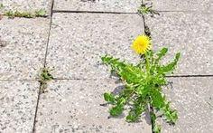 Essigreiniger gegen Unkraut in Fugen von Platten in Hof & Garten