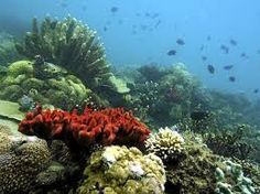 Research shows marine reserves used to replenish fish stocks are helping coral on the Great Barrier Reef. Palawan, Climate Change Debate, Philippines, Parc A Theme, Monkey Park, Religious Experience, Marine Reserves, Fish Stock, Sky News