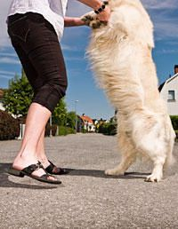 Learn 10 Unusual (but useful) tricks you can teach your dog! #pets #pettips #dogs