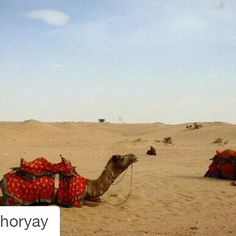#Repost @petrichoryay with @repostapp To get featured tag your post with #talestreet the desert sands and the camels. // #rajasthan #rajasthani #oyemyclick #oyeitsindia #_oye #_soi #talestreet #igersrajasthan #jaisalmer #incredibleindia #traveldiaries #rajasthandiaries #apnorajasthan #click_india_click #india_gram #pixelpanda #bnw_india #travel #photogram #photooftheday #trellatale #desert #camel #love #eveningsky #exposure#twitter