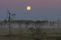 Finland/Siikainen by Antti Partanen Finland, Celestial, Outdoor, Outdoors, Outdoor Games, The Great Outdoors