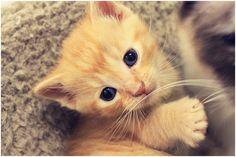 adorable orange kitten