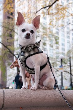 Houndstooth dog harness from Sophisticated Pup.  Sophisticated Pup premium pet apparel, collars, leashes and accessories are all handmade in