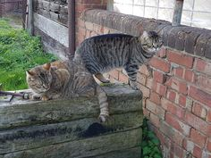 Meet our two new additions to the farm, Nala and Simba. They love to meet any new guests visiting. Love To Meet, Dairy, Cottage, Cats, Animals, Gatos, Animales, Animaux, Cottages