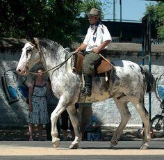sabino-criollo-horse-1.jpg (640×626)