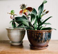 Instagram Post By Pistils Nursery Jan 19 2016 At 12 19am Utc Potted Plantsgarden Plantsindoor