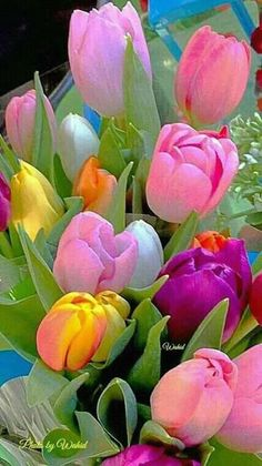 http://www.arraiqflorist.com/p/toko-bunga-di-bali-081290000686_11.html