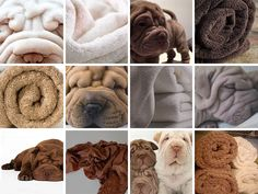 Sharpei or towel? / So adorable! Animals And Pets, Funny Animals, Cute Animals, Chien Komondor, Cute Dogs And Puppies, I Love Dogs, Baby Puppies, Doggies, Funny Animal Pictures
