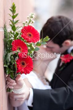 Bridal Bouquet Gerbera Daisy Flowers with Bride and Groom Kissing Royalty Free Stock Photo Daisy Flowers, Gerbera, Image Now, Photo Shoots, Kissing, Wedding Bouquets, Family Photos, Groom, Royalty Free Stock Photos