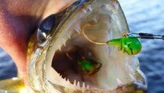 Top Five Walleye Fishing Tips