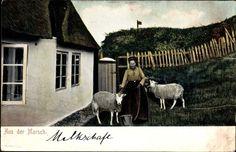 Ansichtskarte / Postkarte Hamburger Land, Aus der Marsch, Bäuerin mit Schafen, Bauernhaus #Elbmarsch